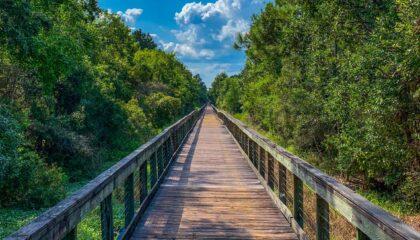 Marcus Bayou Wetland